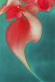 Bastet - Calla Collection -rot grün