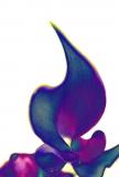 Bastet-Calla Collection- noch eine Variante